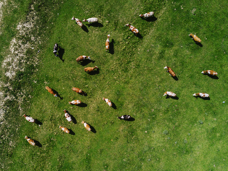 Drones and Ranching